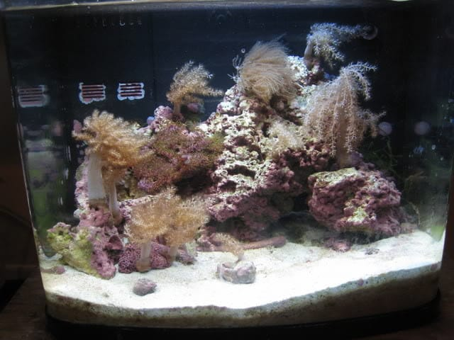 A Nano Reef For You