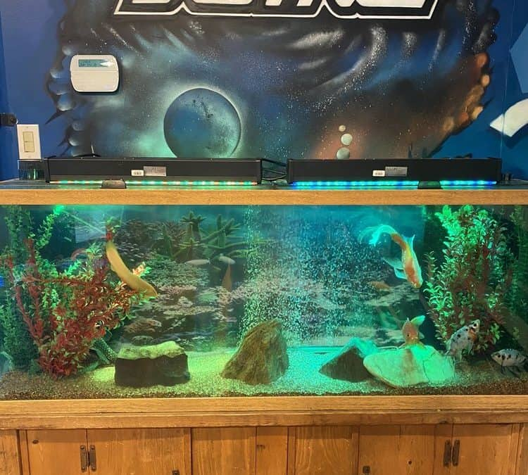 5 Aquarium Maintenance Tools You Can't Do Without