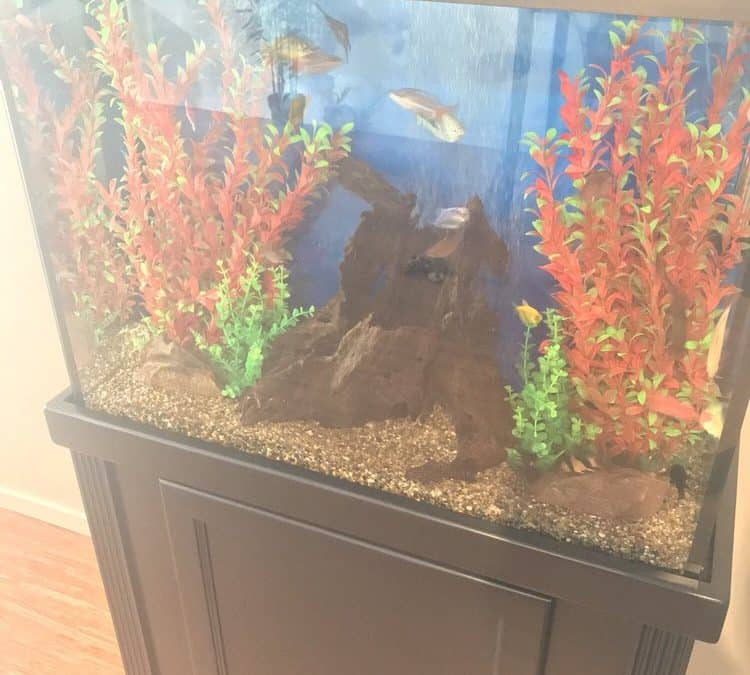 How To Move a Custom Aquarium Without Taking a Bath