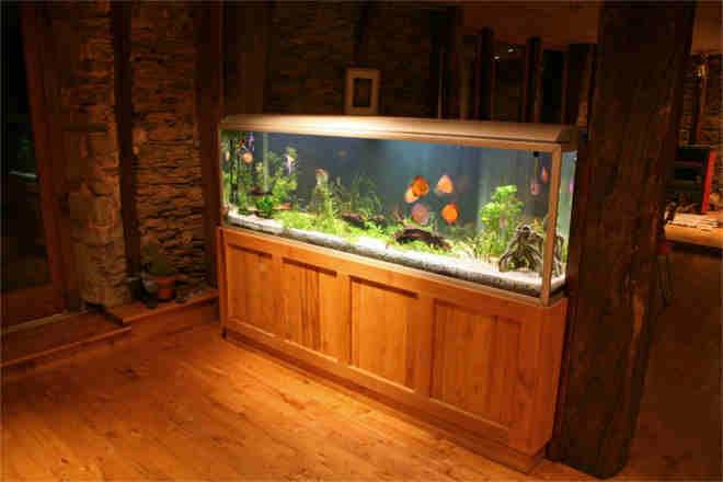 Why Your Man Cave Should Be a Fish Room