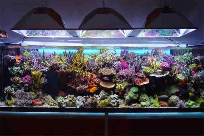 7 Smart Ways To Spruce Up & Refresh Your Aquarium