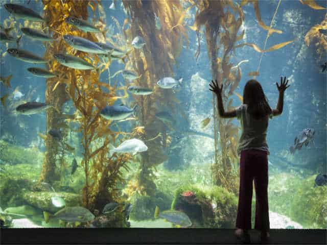 4 Great L.A. Aquariums You Should Check Out