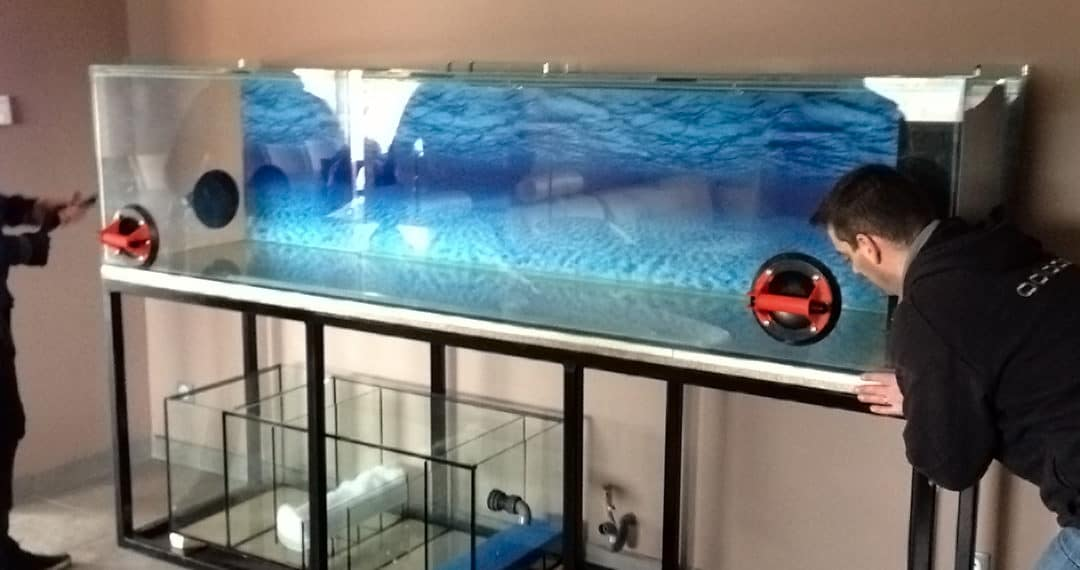 Custom Aquariums to Delight You