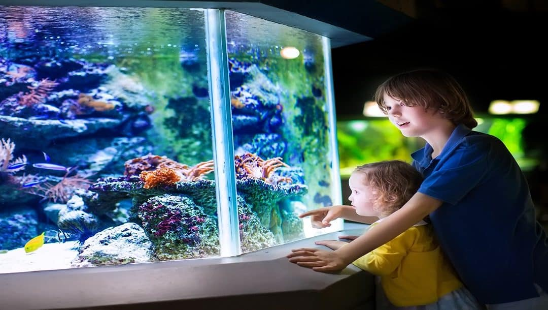 5 Smart Ways To Save On a Saltwater Aquarium Installation