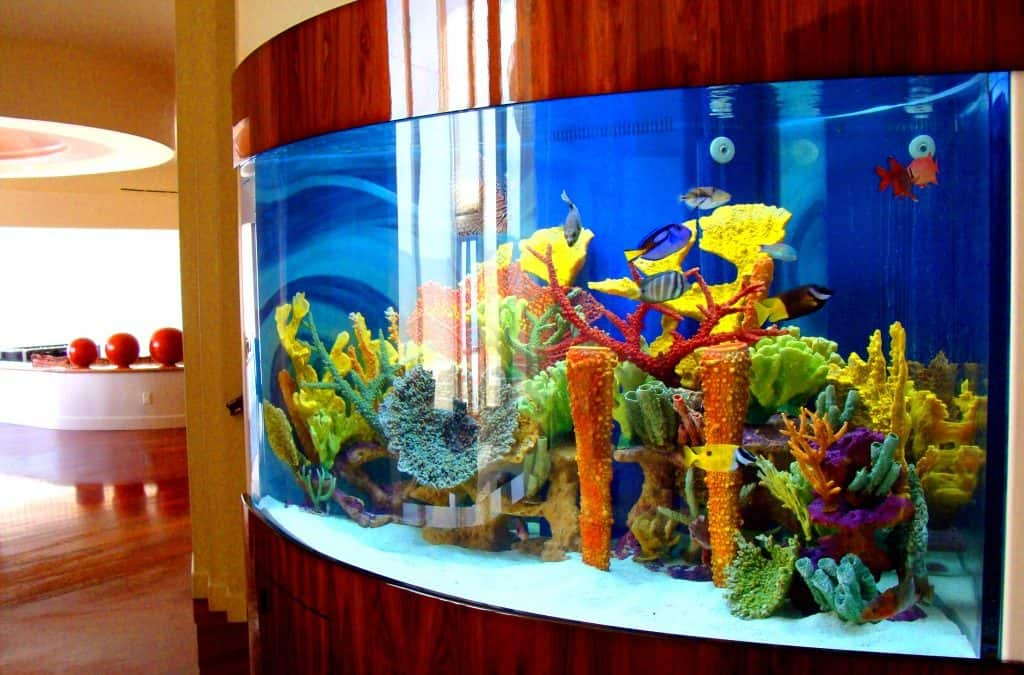 Show Your Fish Some Love With These Aquarium Maintenance Tips for Newbies