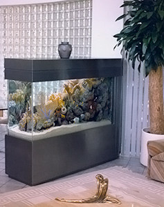 Top Five Fish for Freshwater Aquariums