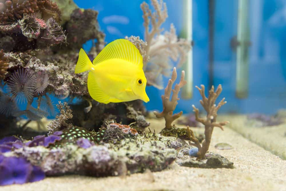 Aquarium Service Tips: Mixing Saltwater for Your Tank