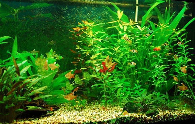 A freshwater aquarium