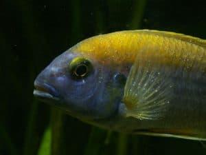 aquarium care and maintenance